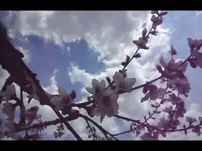 복숭아꽃과 벌의 사랑