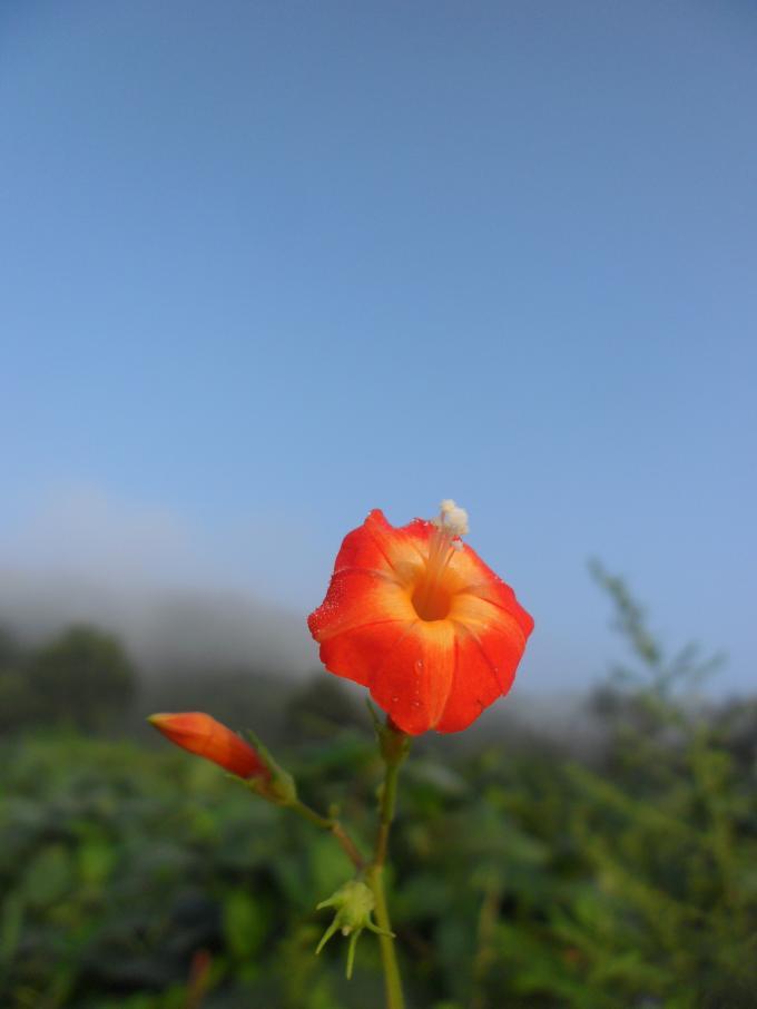 이름 모를 들꽃
